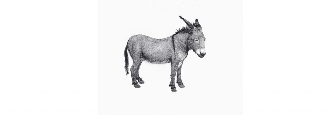 Donkey six omen